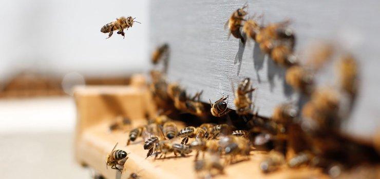 die faszinierende Welt der Bienen